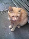 耳が聞こえない黄色い猫
